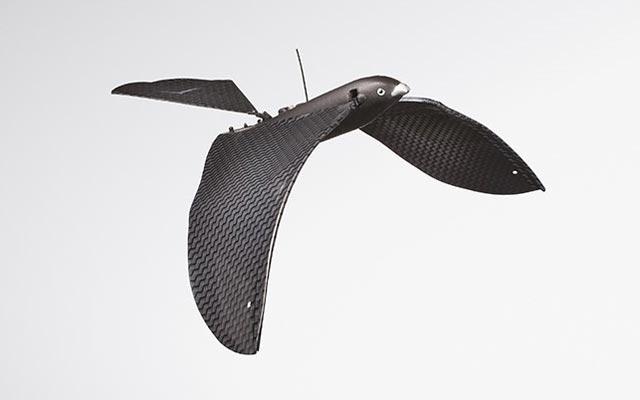 Oiseau bionique Avitron